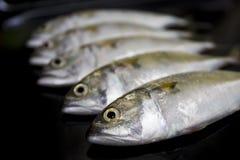 A group of mackerel on black background Stock Photos