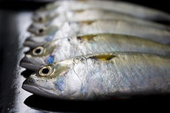 A group of mackerel on black background Royalty Free Stock Images
