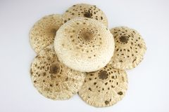 Group of macrolepiota mushrooms isolated. On white Royalty Free Stock Photos