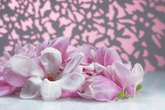 Group of magnolia flower on a white board royalty free stock photo