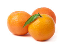 Group mandarins white isolated studio shot Royalty Free Stock Images