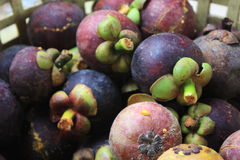 Group of Mangosteen Royalty Free Stock Image