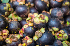 Group of Mangosteen Stock Photography