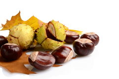 Group of many chestnuts in the corner with autumn leaves Stock Image