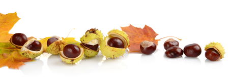 Group of many chestnuts in line with autumn leaves Stock Photo