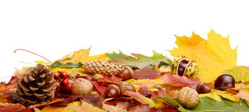 Group many forest fruits on autumn leaves in line Royalty Free Stock Photography