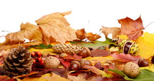 Group many forest fruits on autumn leaves in line Royalty Free Stock Images