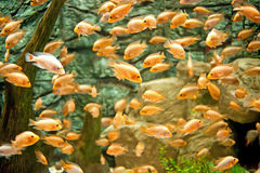 Group of marine fish Stock Images