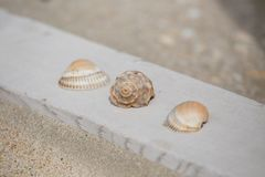 Group of 3 shells Royalty Free Stock Photo