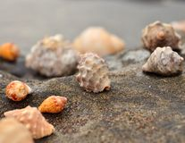 Group of marine shells in the shore Royalty Free Stock Image