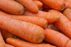 Group of mature  carrots. Natural organic diet. Group of mature and tasty red carrots. Natural organic diet Royalty Free Stock Photo