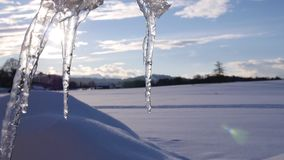 Group of melting icicle. Losing water drops at a sunny day; blue sky, clouds, snow landscape in the background stock footage