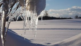 Group of melting icicle. Losing water drops at a sunny day; blue sky, clouds, snow landscape in the background stock video footage