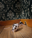 Group of mice walking in a luxury old-fashioned ro Royalty Free Stock Images