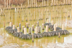 Group of mock-up mangrove tree model Stock Images
