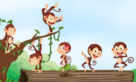 A group of monkeys. Illustration of group of monkeys and nature Royalty Free Stock Image