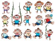 A group of monkeys. Illustration of a group of monkeys on a white background royalty free illustration