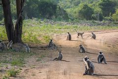 Monkeys team on the road. Royalty Free Stock Photography
