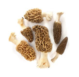 Group of morel mushrooms Stock Image