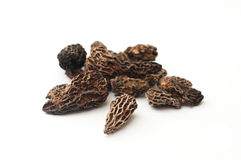 Group of morels dried on the white background Royalty Free Stock Photo