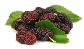 Group of mulberry with leafs Stock Photos