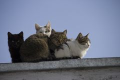 A group of multi-colored cats on the roof looks at the camera royalty free stock photography
