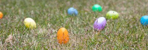 A group of Easter eggs as a background ready to be hunted. A group of multi colored Easter eggs ready to be hunted by children stock image
