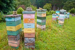 Group of Multicolored wooden Bee Hives Royalty Free Stock Photos