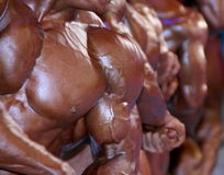 Group of muscular male chests. Of bodybuilders Royalty Free Stock Photography