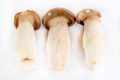 Group of Mushroom Royalty Free Stock Images