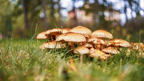 A group of mushroom in the park. A group of mushroom in green park Stock Photography