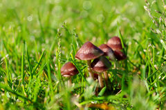Group of mushrooms Stock Images