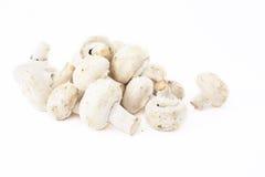 Group mushrooms Stock Photo