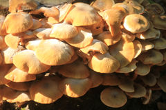 Group Mushrooms Stock Images