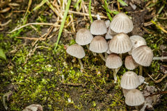 Group of mushrooms Royalty Free Stock Image