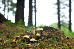 Group of mushrooms growing wild in forest Stock Photos