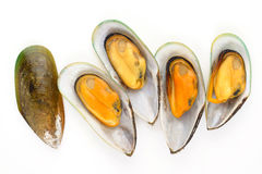 Group of mussels Stock Image