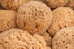 Group of natural sponges Stock Images