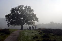Group of nature lovers consulting on an early morning Royalty Free Stock Photos