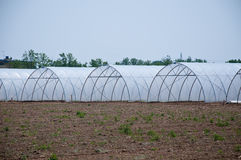 group of new greenhouses that serve to make the vegetables grow Royalty Free Stock Photo