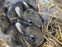 A group of newborn rabbits on a farm Stock Photo