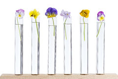 Group of nice pansy multicolored glass test tubes Stock Images