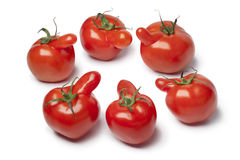 Group of nosy tomatoes Stock Images