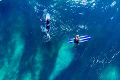 Group of novice surfers are learning to embark on wave. Aerial top view.  royalty free stock photos