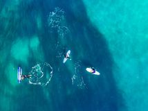 Group of novice surfers are learning to embark on wave. Aerial top view royalty free stock photography