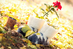 Group of objects in nature in autumn Stock Photo