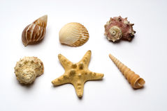 Group of ocean objects Stock Images