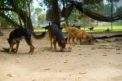 Group oef dogs eat food by cup feed stock photos