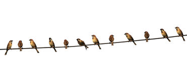 Group Of Birds On A Power Line Isolated On White Background Stock Photos