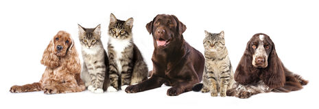 Free Group Of Cats And Dogs Stock Image - 33442671